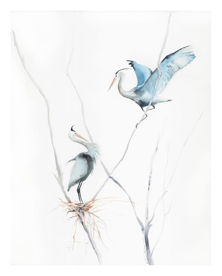 herons-nest