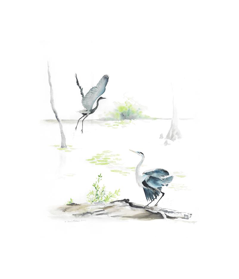 herons_marsh